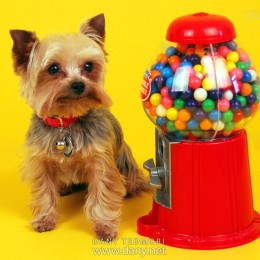 Dog with Candy Dispenser Photo