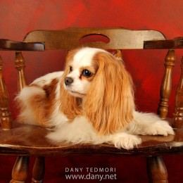 Dog on Antique Chair Prop