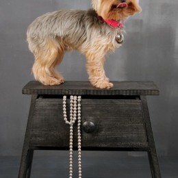 Dog Standing on Chair Prop