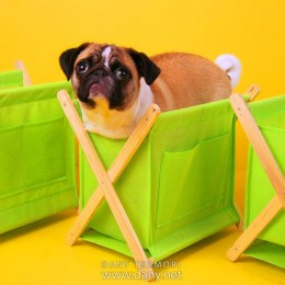 Pug in Basket Prop
