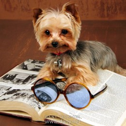 Nerdy Dog Reading Book Prop